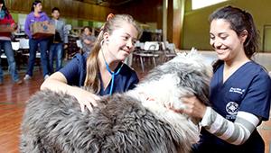Programa de Tenencia Responsable de Mascotas