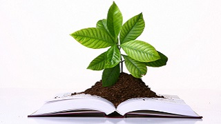 green-plant-growing-on-the-pages-of-book