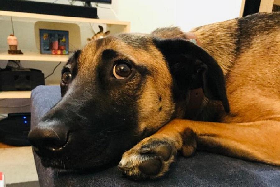 Mascotas en confinamiento… otra vez: ¿Cómo enfrentarlo?