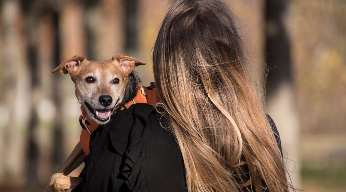 Proyecto de Medicina Veterinaria reveló la población de mascotas en Puerto Montt
