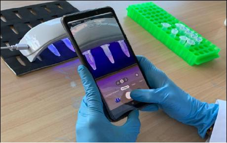 Dispositivo nanotecnológico permitirá diagnóstico rápido de tuberculosis bovina