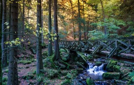 Sobregiro ecológico: La Tierra ya gastó todos sus recursos para 2021