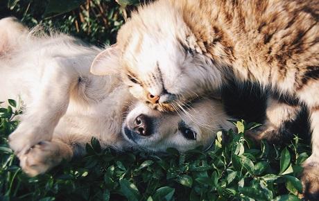 Cómo preparar a las mascotas para la vuelta a la normalidad