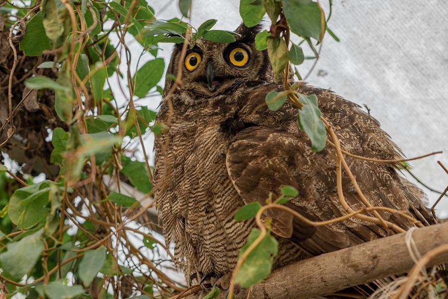 El vital rol de los Cerefas en la fauna silvestre