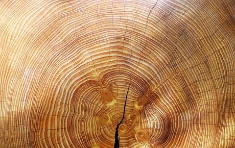 Las bondades de la madera y su aporte a la huella de carbono
