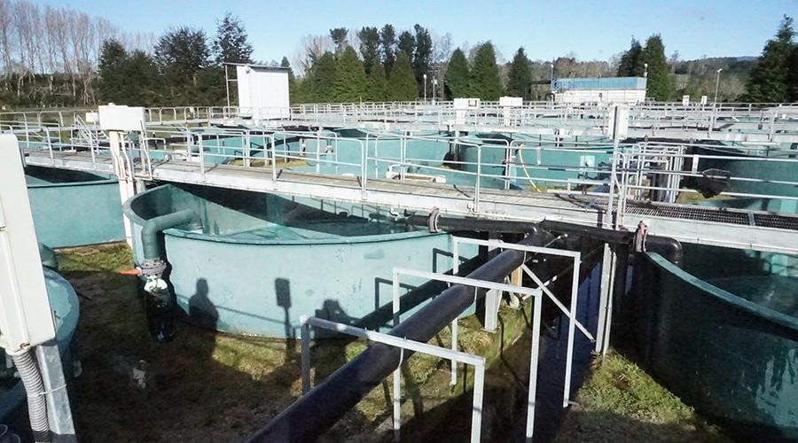 Estudiantes realizaron operativo social en planta  de pisicultura de Salmones Camanchaca.