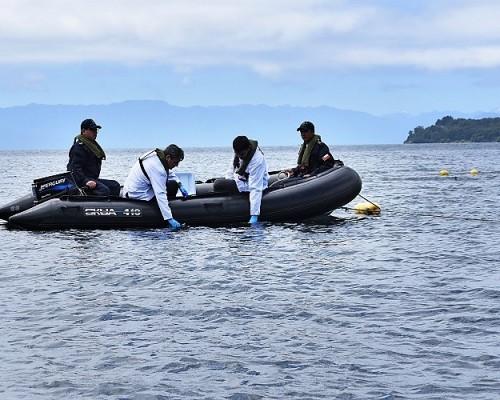 Detectan presencia de dos metazoos en peces silvestres capturados en lago Llanquihue