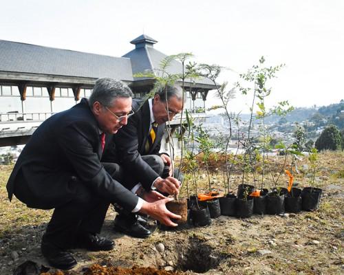 plantación-arboles