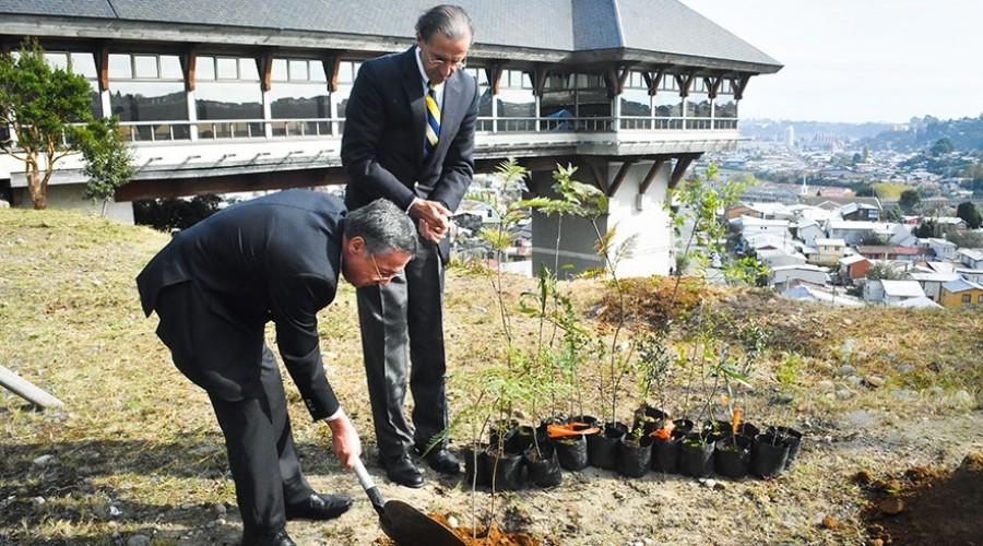 Con plantación de árboles nativos buscan concientizar sobre el cuidado del medioambiente
