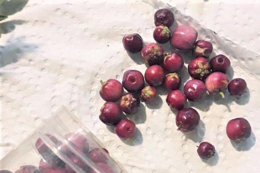 Docente destacó en congreso internacional propiedades antioxidantes de fruto nativo