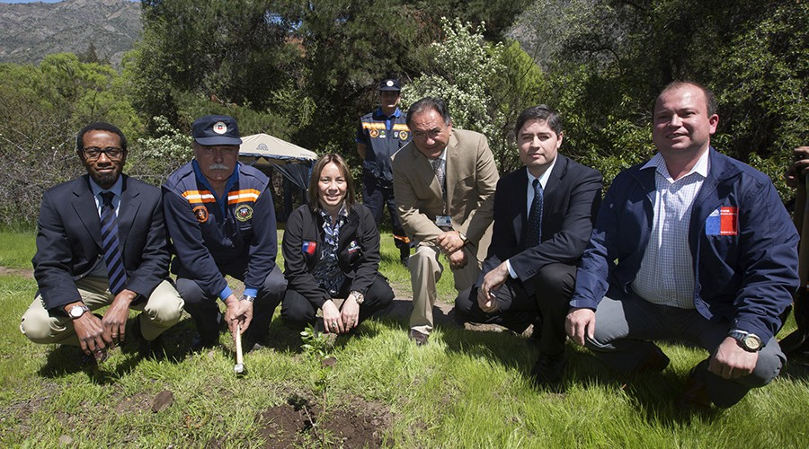 arborizacion-proyecto-vcm-033