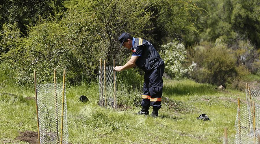 arborizacion-proyecto-vcm-059