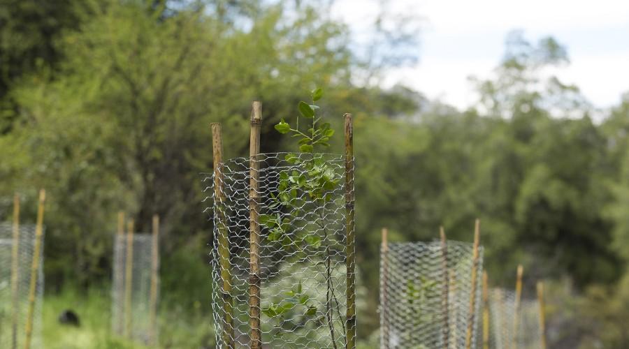 arborizacion-proyecto-vcm-074