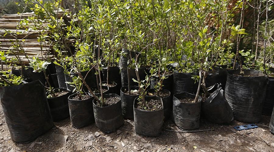 arborizacion-proyecto-vcm-083