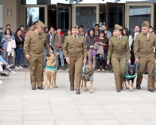Aplaudida fue la participación del Escuadrón de Adiestramiento Canino de Carabineros en la ceremonia.