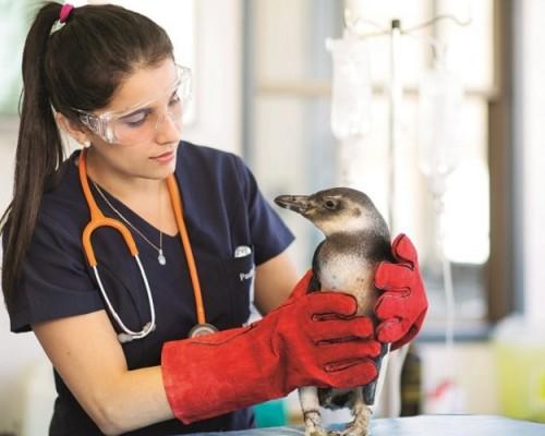 USS De la Patagonia prepara reapertura de su Hospital Clínico Veterinario