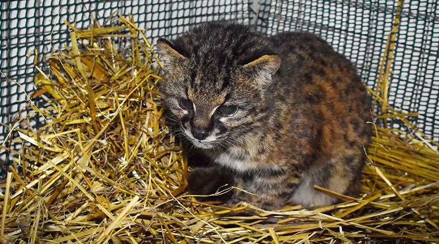 gato-guiña