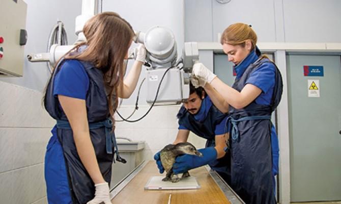 hospital-clinico-veterinario