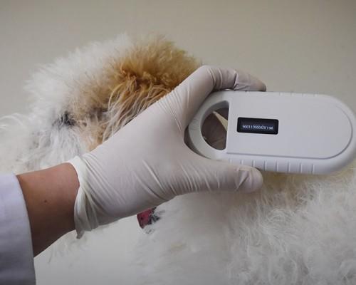 Tenencia Responsable: la clave para reducir la cantidad de perros abandonados