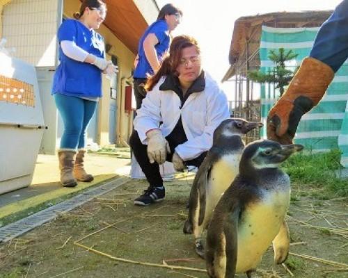 pinguinos-liberados